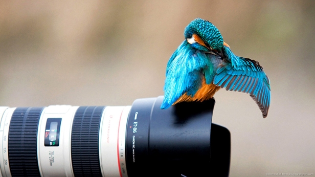 photography-bird-camera-lens-hd