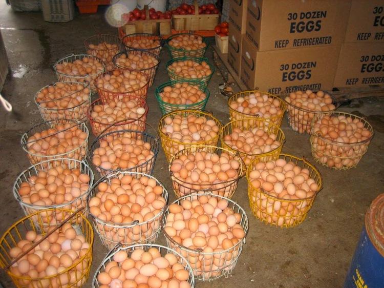 eggs-poultry-cretes